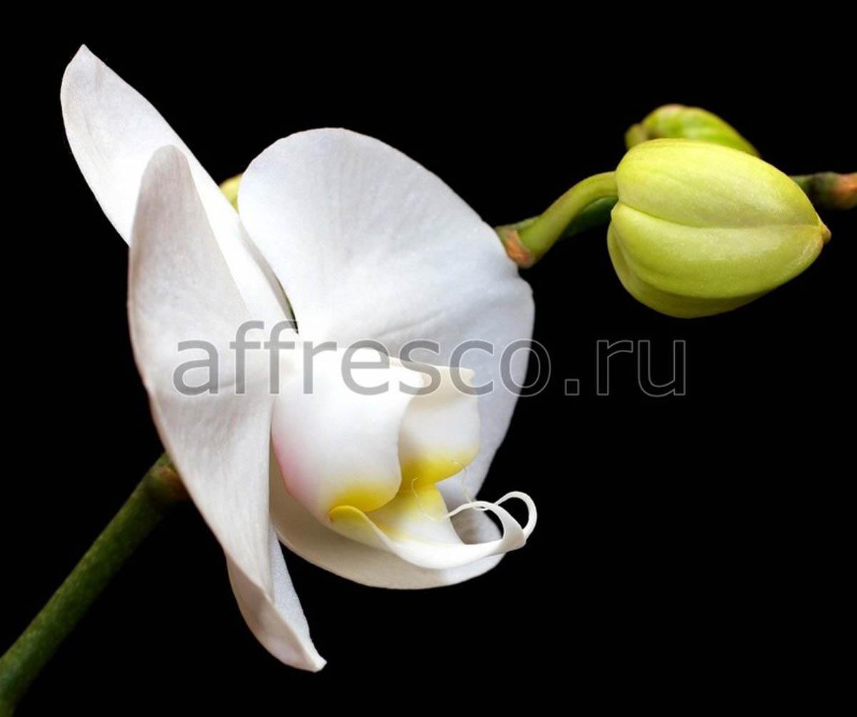 Фреска Affresco 7204
