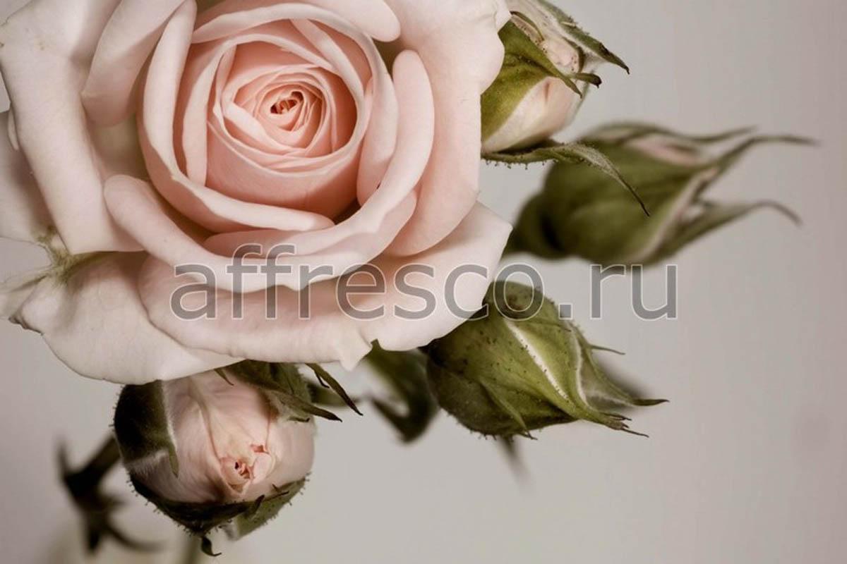 Фреска Affresco 7208