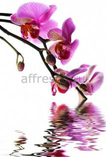 Фреска Affresco 7205