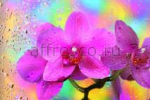 Фреска Affresco 7227